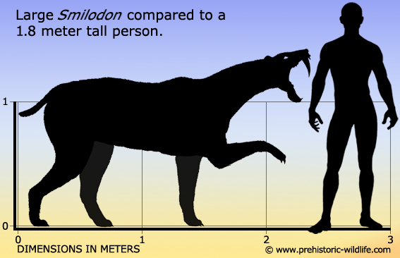 smilodon-size