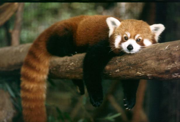 panda1_709041545401.png